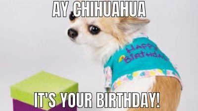 Dachshund happy birthday meme