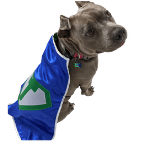 Personalized Dog Superhero Cape