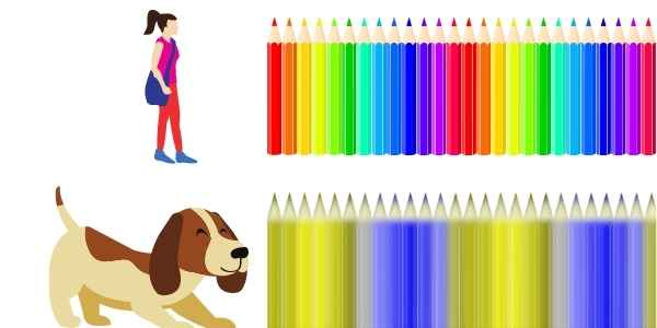 are dog really color-blind