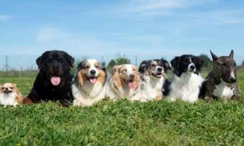 Who has the most dogs in the world