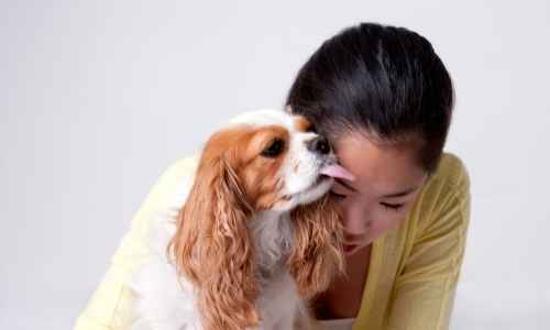 Why do dogs lick you