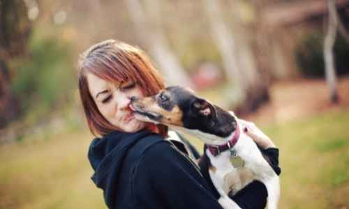 Dogs love to lick their owners