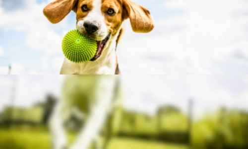 Here is an example of what a dog can see and what we see in terms of colors.