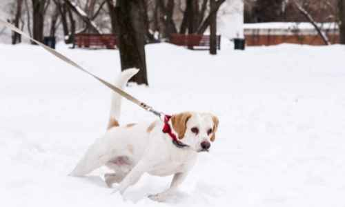 Training your dog to walk on a leash tips