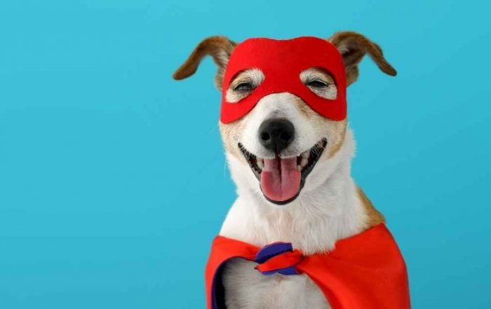 5 Healthy Oils For Dogs To Grow Superpowers