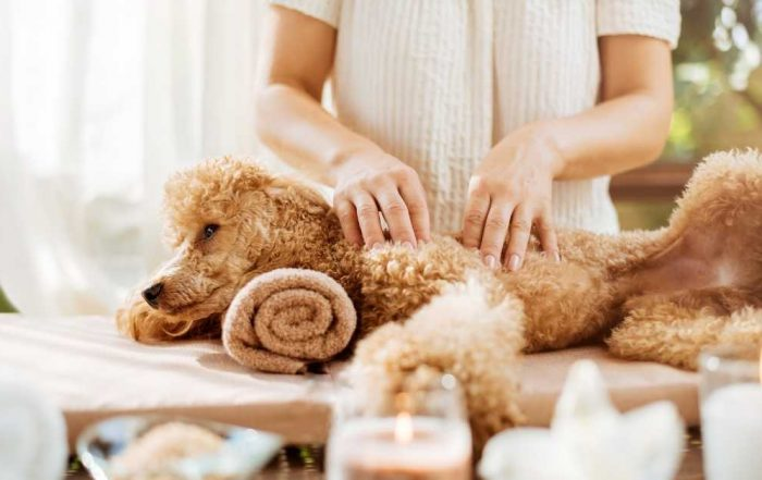Dog Massage Therapy Techniques At Home