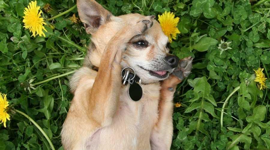 Funny Dog Tag Sayings