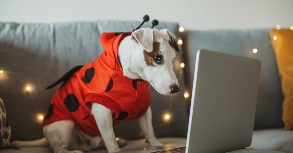Halloween Dog Captions, Quotes, And Sayings